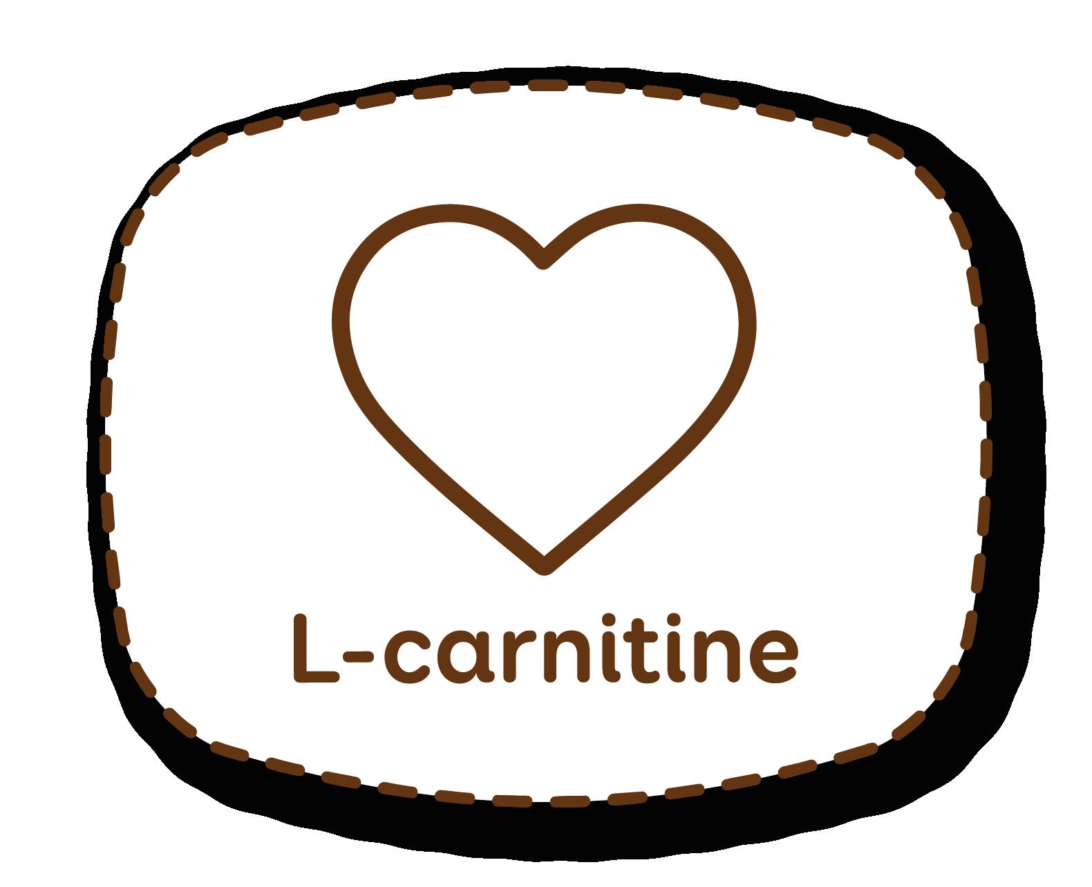 L-carnitina: favorece o tónus muscular ajudando a queimar melhor a gordura subcutânea