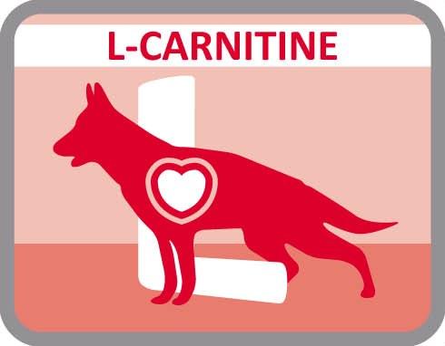 Incorpora L-carnitina para ativar o metabolismo das gorduras